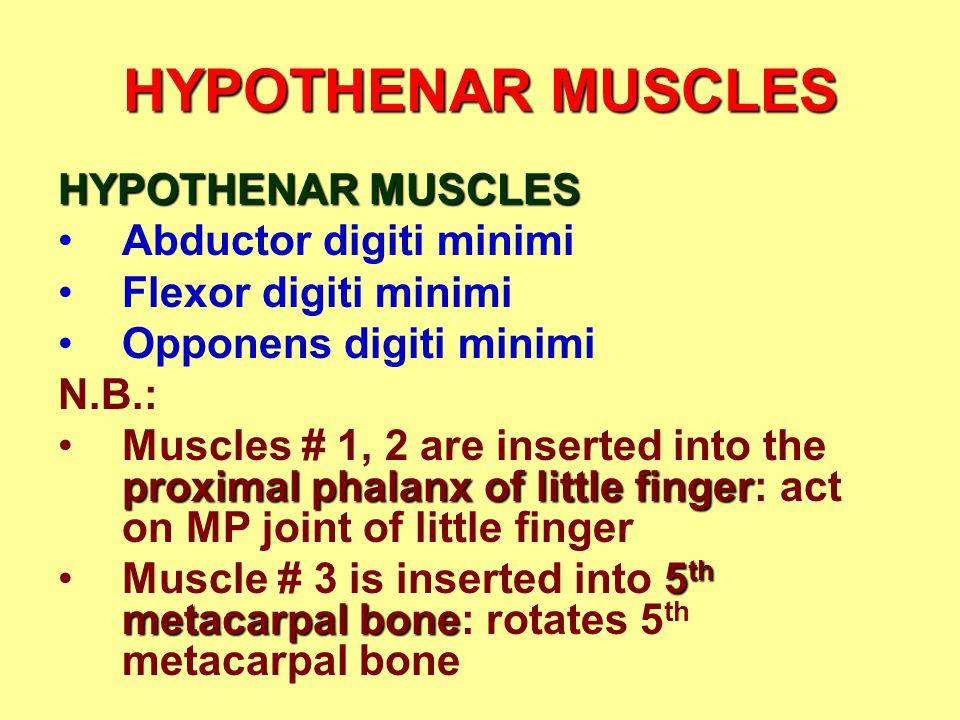 HYPOTHENAR MUSCLES HYPOTHENAR MUSCLES Abductor digiti minimi