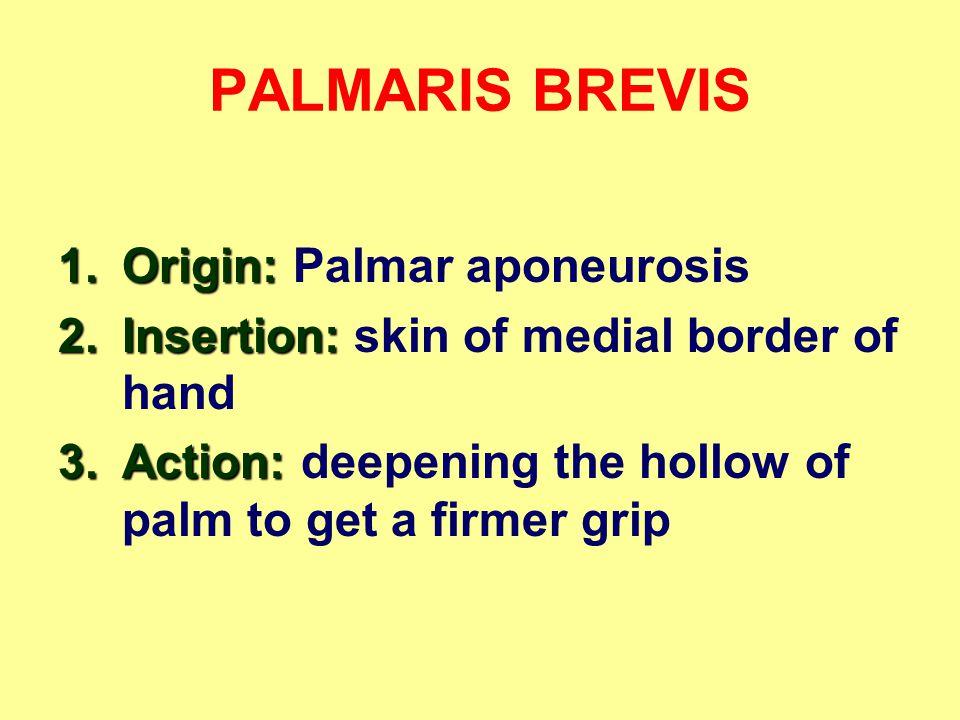 PALMARIS BREVIS Origin: Palmar aponeurosis