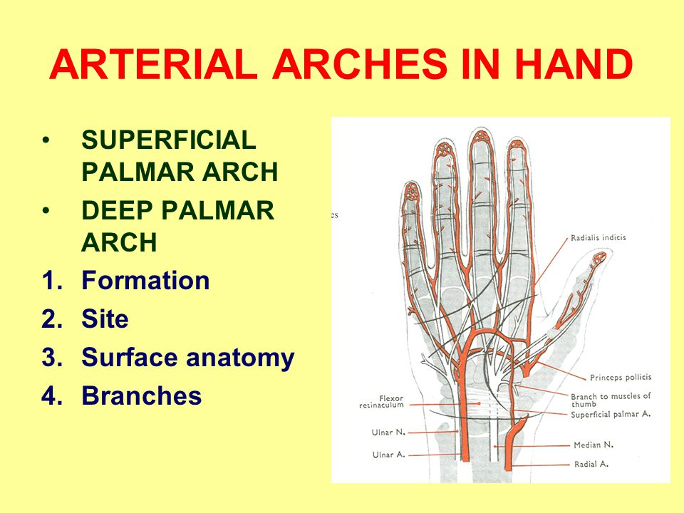 ARTERIAL ARCHES IN HAND