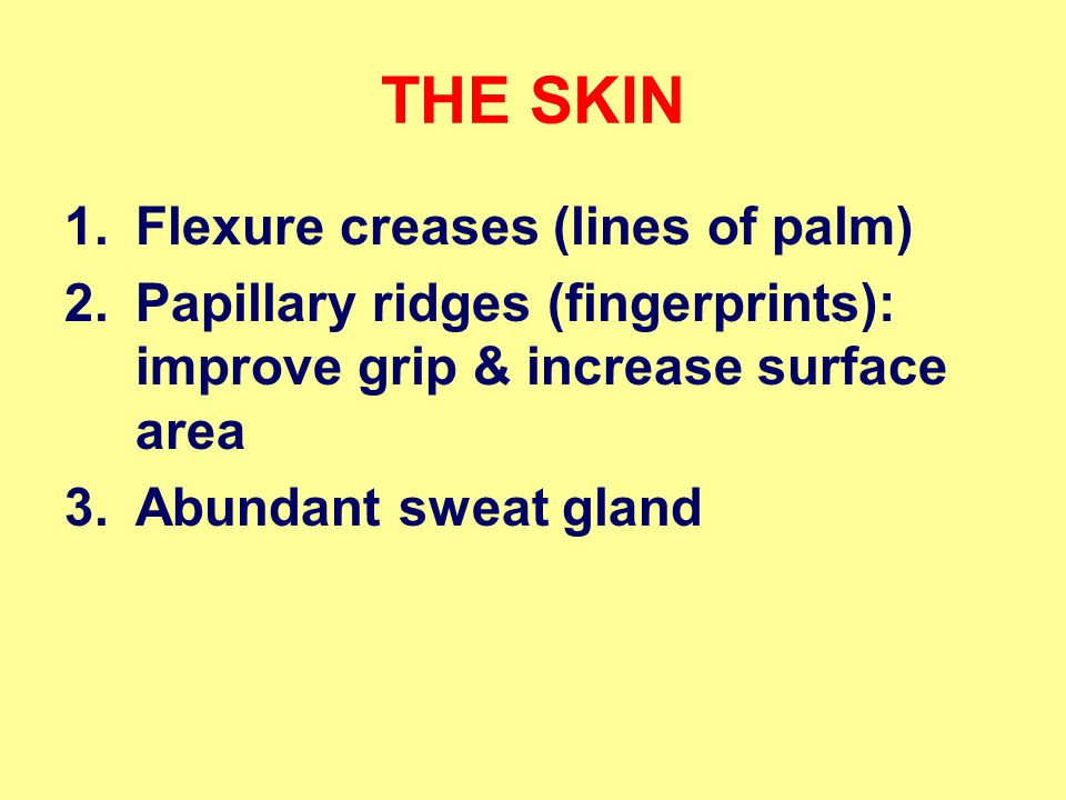 THE SKIN Flexure creases (lines of palm)
