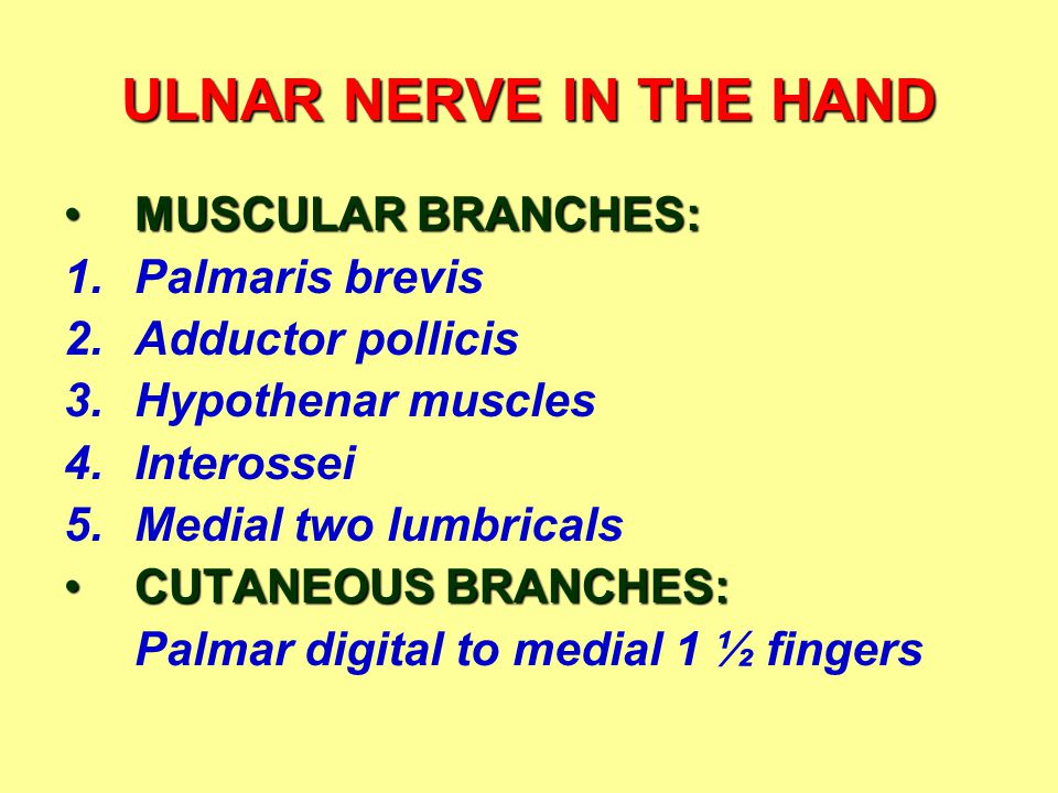 ULNAR NERVE IN THE HAND MUSCULAR BRANCHES: Palmaris brevis