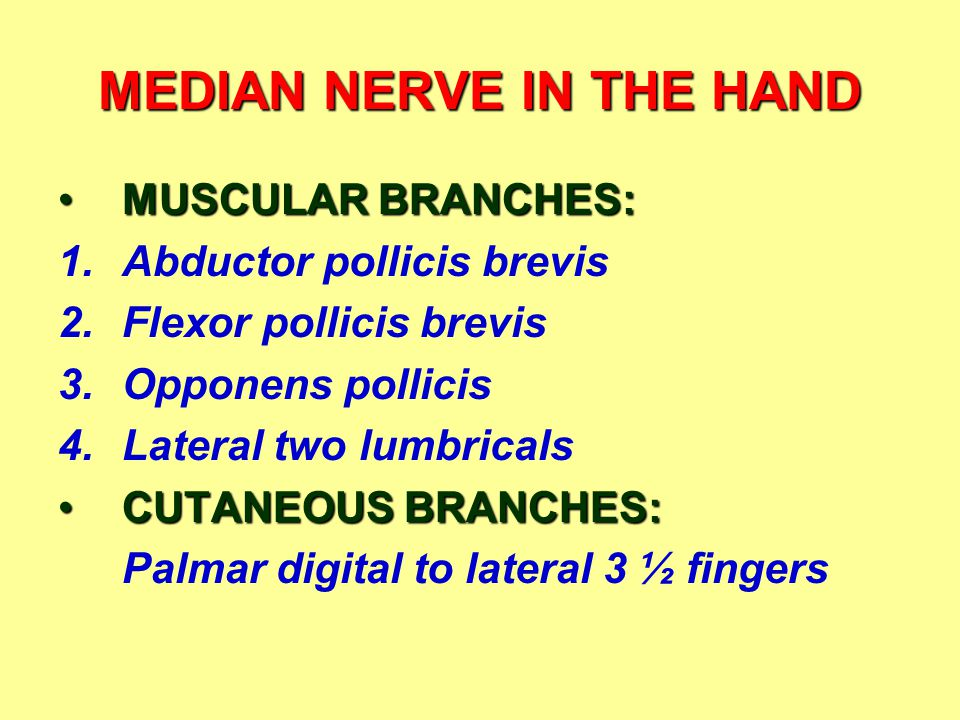MEDIAN NERVE IN THE HAND