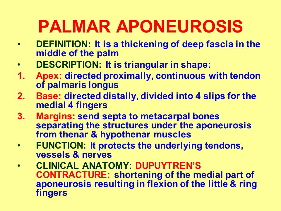 PALMAR APONEUROSIS DEFINITION: It is a thickening of deep fascia in the middle of the palm. DESCRIPTION: It is triangular in shape: