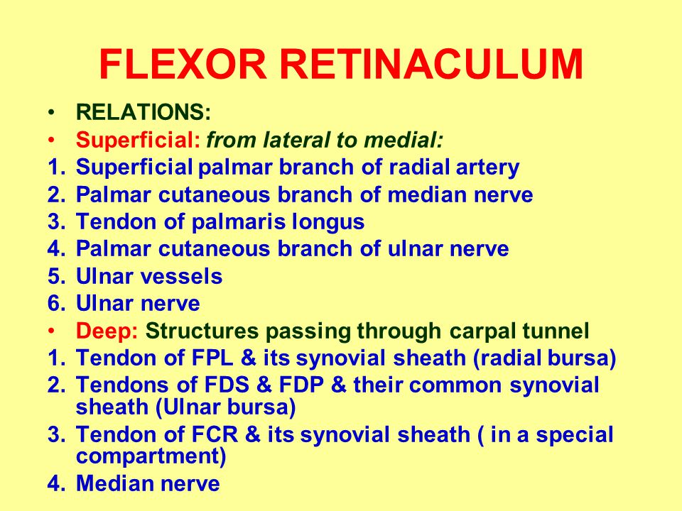 FLEXOR RETINACULUM RELATIONS: Superficial: from lateral to medial: