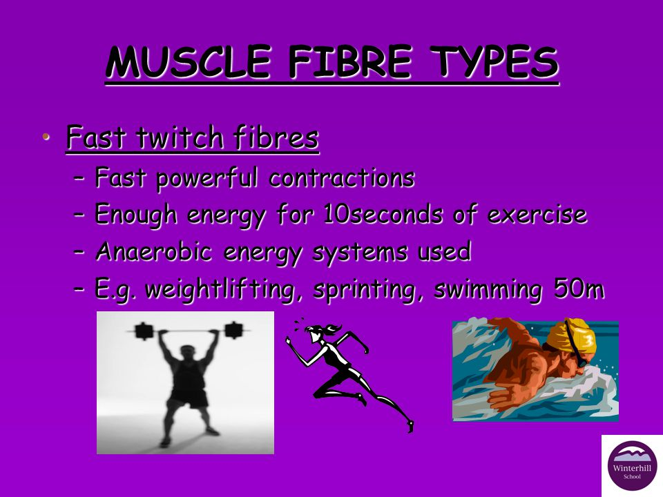 MUSCLE FIBRE TYPES Fast twitch fibres Fast powerful contractions