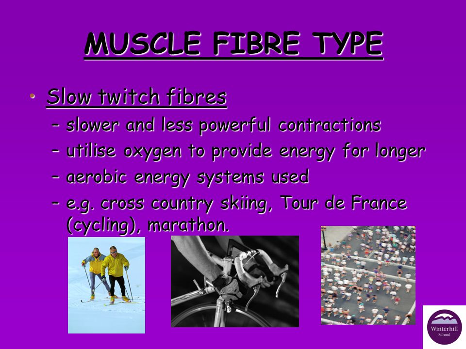 MUSCLE FIBRE TYPE Slow twitch fibres