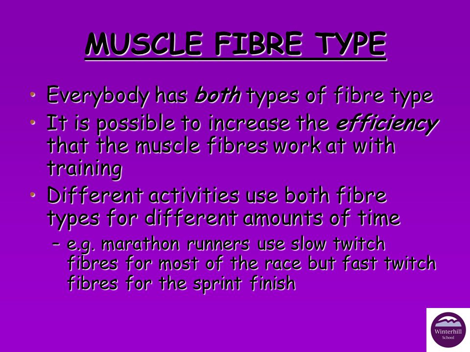 MUSCLE FIBRE TYPE Everybody has both types of fibre type