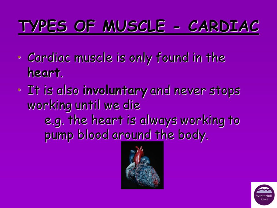 TYPES OF MUSCLE - CARDIAC