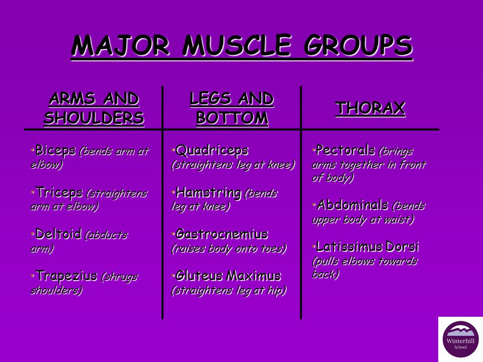 MAJOR MUSCLE GROUPS ARMS AND SHOULDERS LEGS AND BOTTOM THORAX