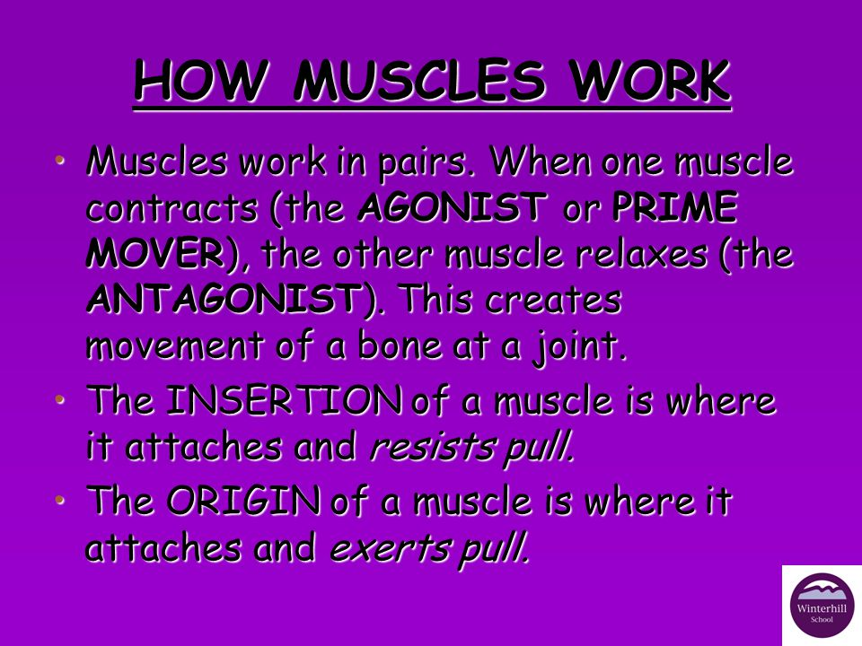 HOW MUSCLES WORK