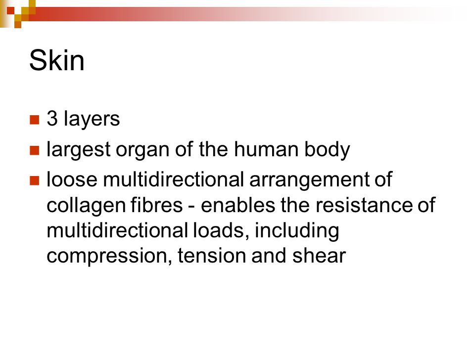 Skin 3 layers largest organ of the human body