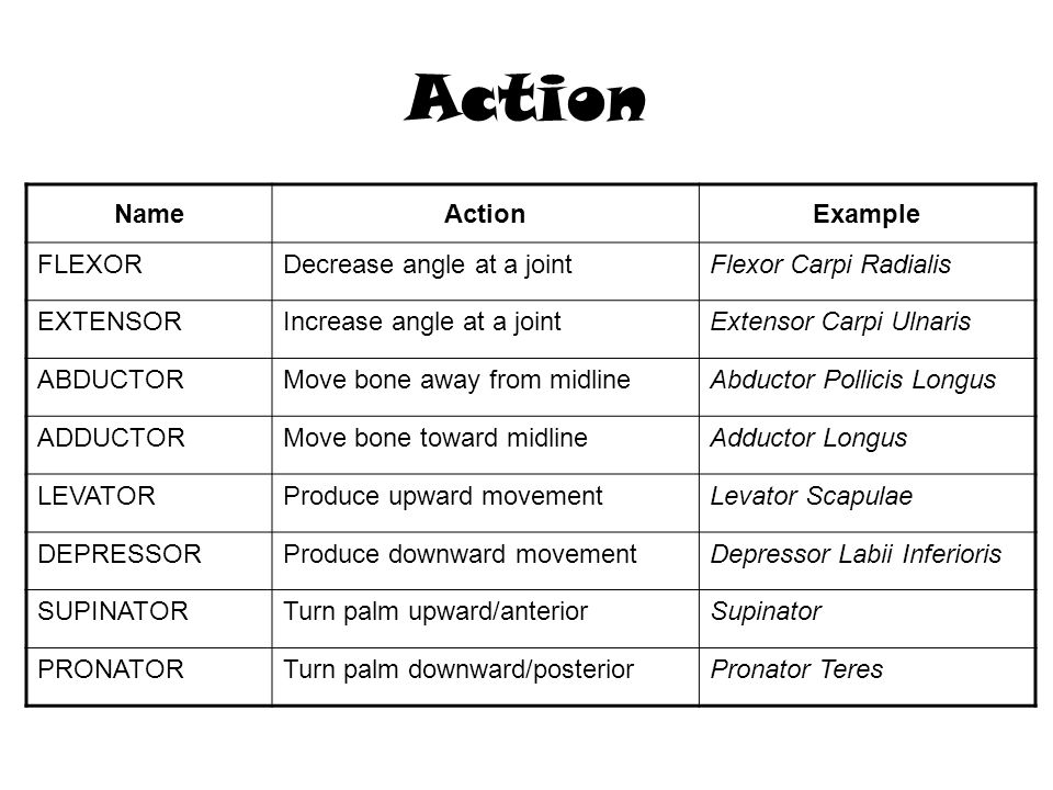 Action Name Action Example FLEXOR Decrease angle at a joint