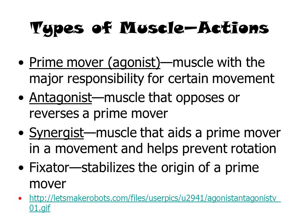 Types of Muscle—Actions