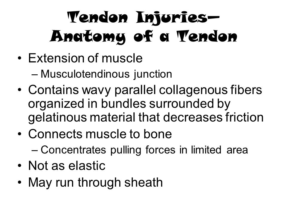 Tendon Injuries— Anatomy of a Tendon