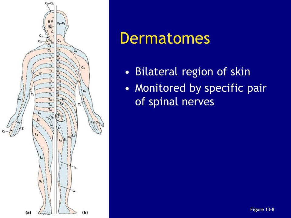 Dermatomes Bilateral region of skin