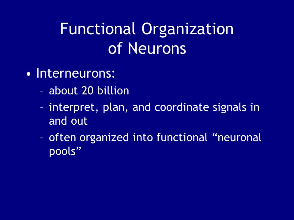 Functional Organization of Neurons