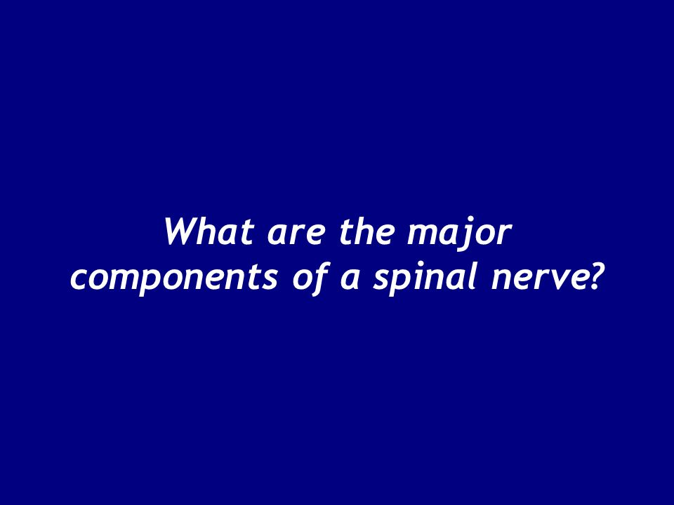 What are the major components of a spinal nerve
