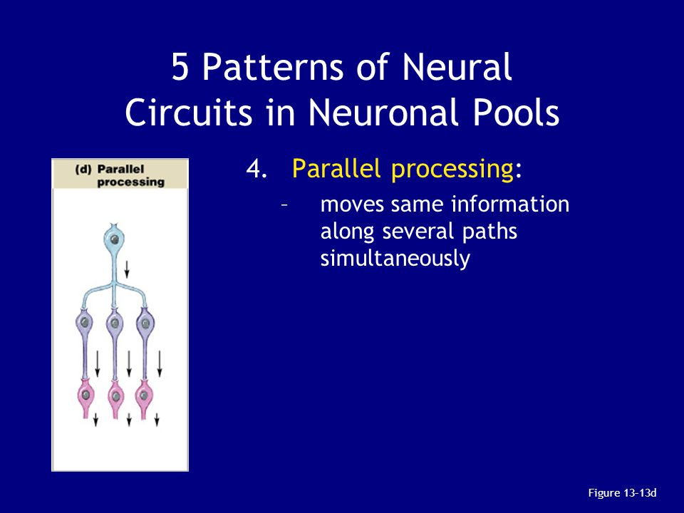 5 Patterns of Neural Circuits in Neuronal Pools