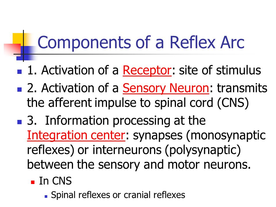 Components of a Reflex Arc