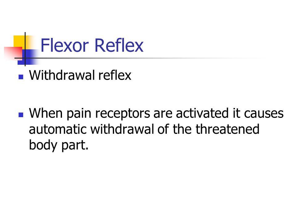 Flexor Reflex Withdrawal reflex