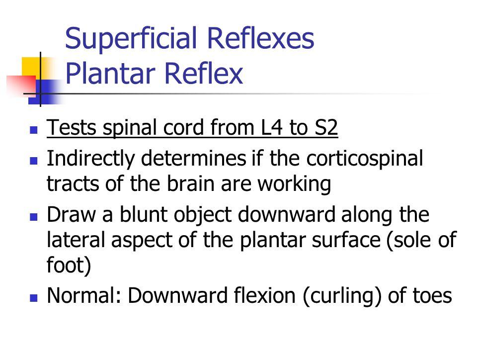 Superficial Reflexes Plantar Reflex