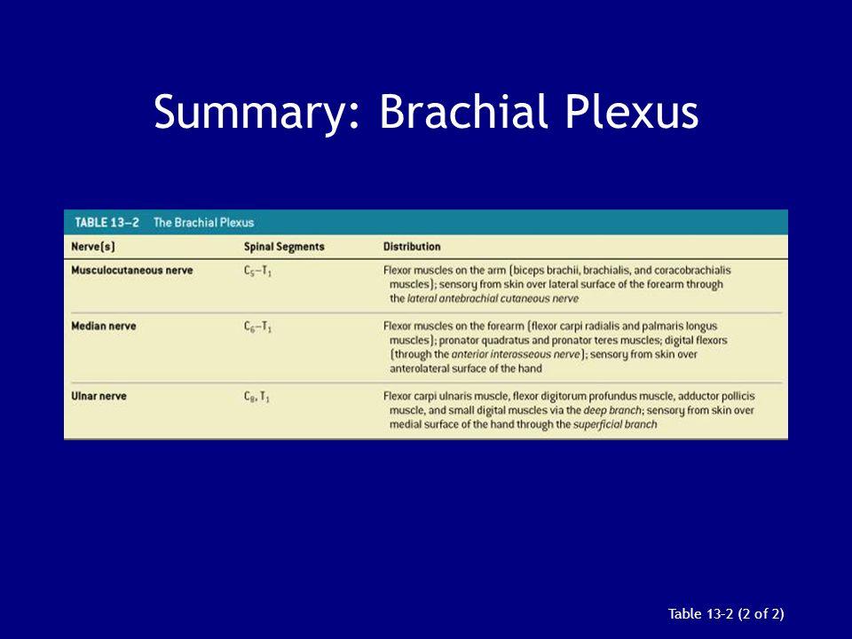 Summary: Brachial Plexus