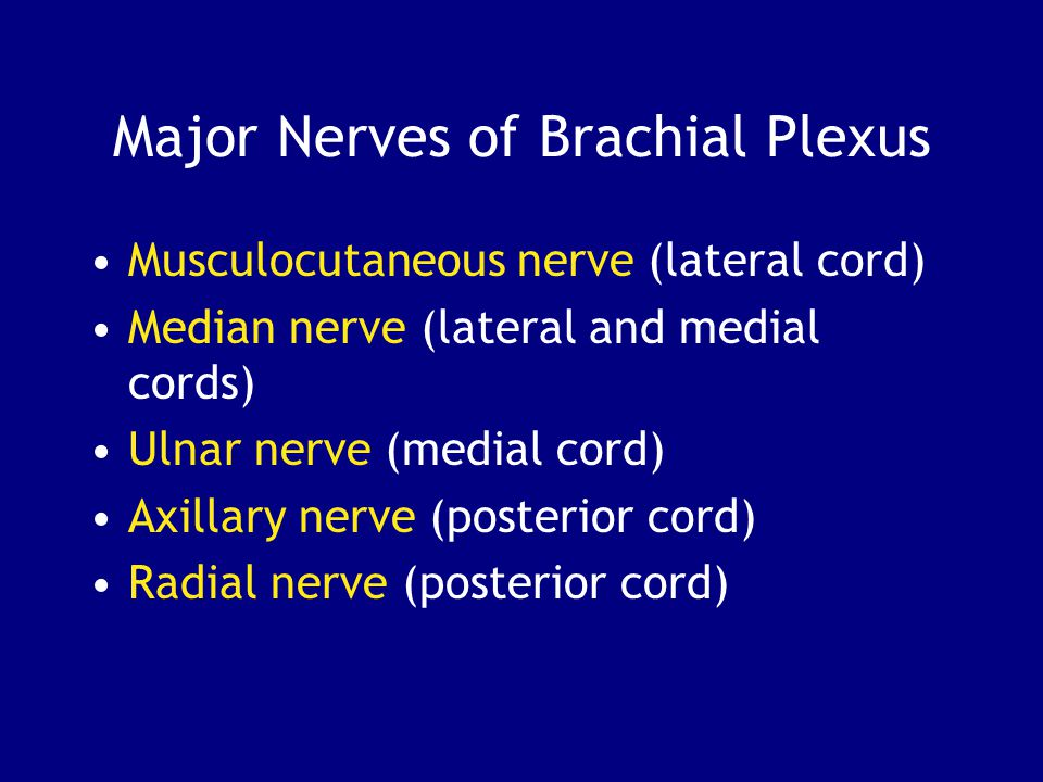Major Nerves of Brachial Plexus