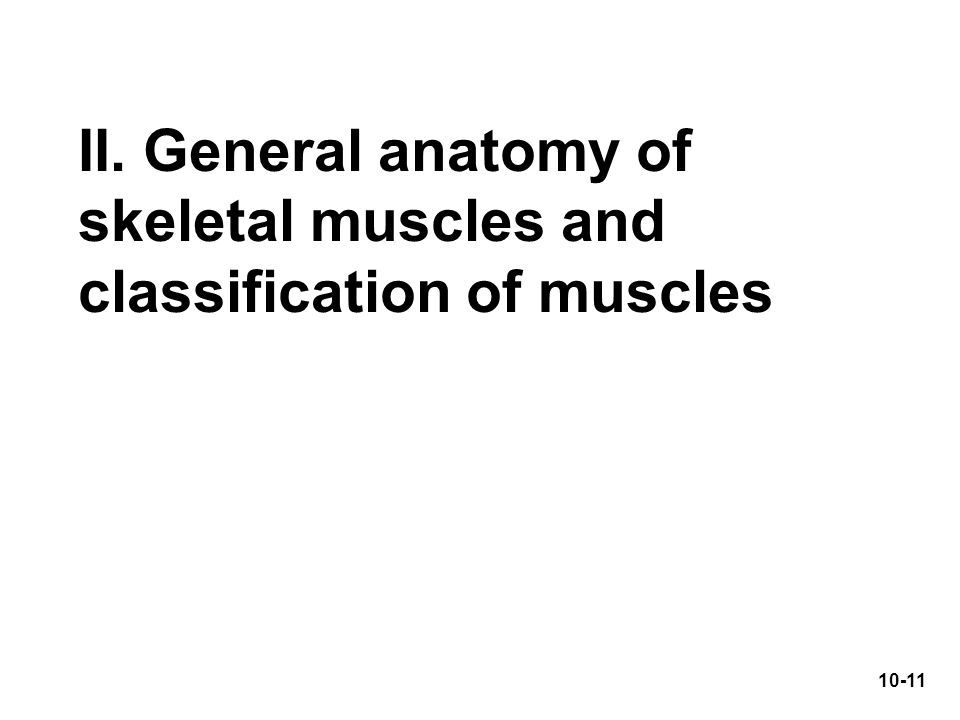 II. General anatomy of skeletal muscles and classification of muscles