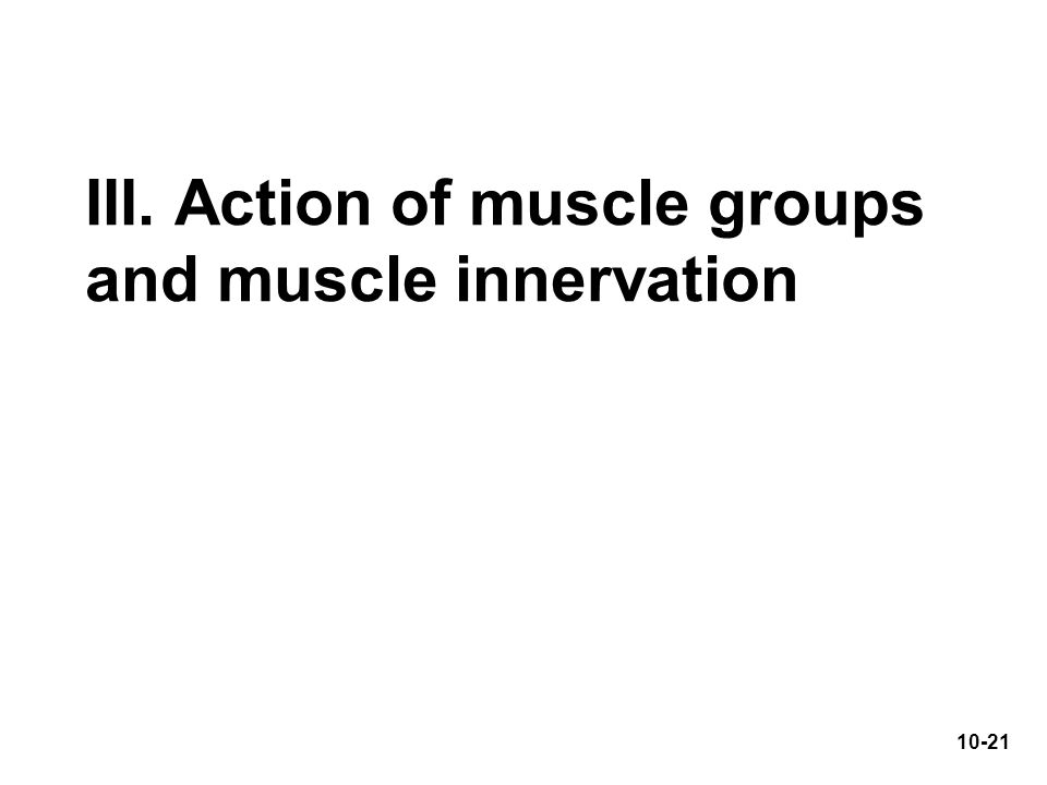 III. Action of muscle groups and muscle innervation