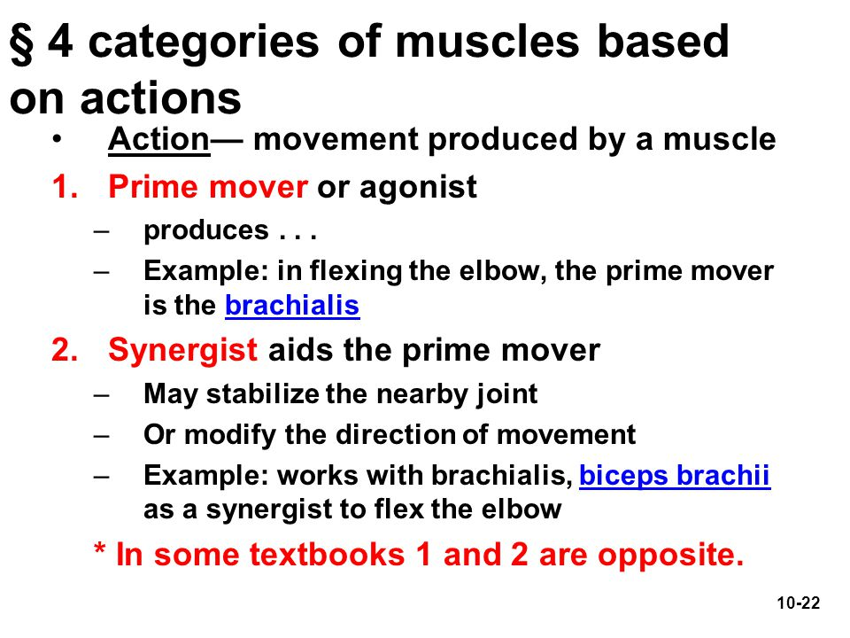§ 4 categories of muscles based on actions