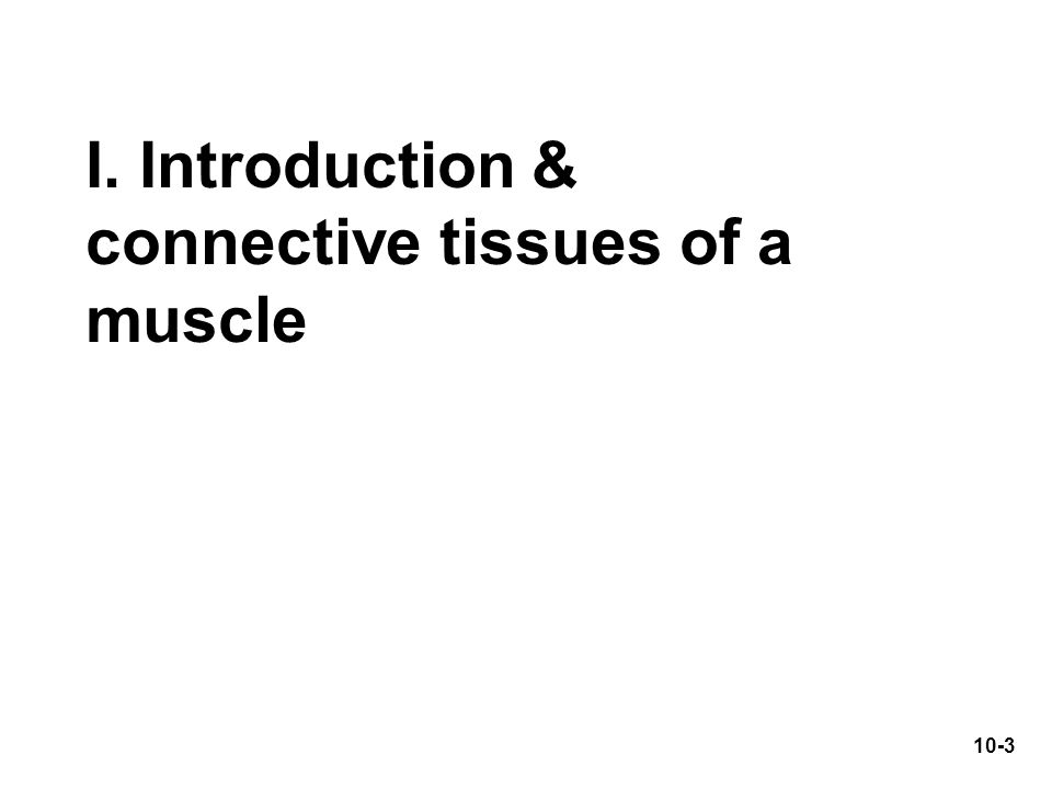 I. Introduction & connective tissues of a muscle