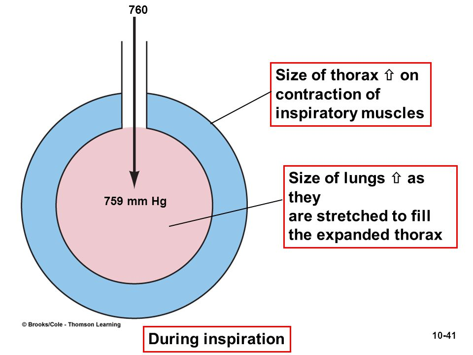 Size of thorax  on contraction of inspiratory muscles