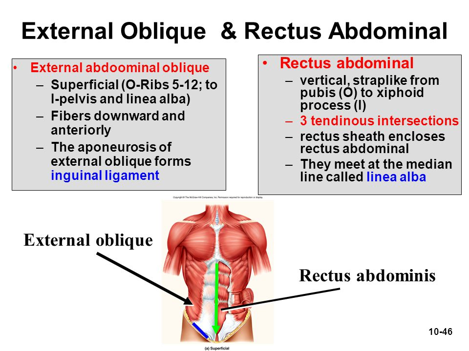 External Oblique & Rectus Abdominal