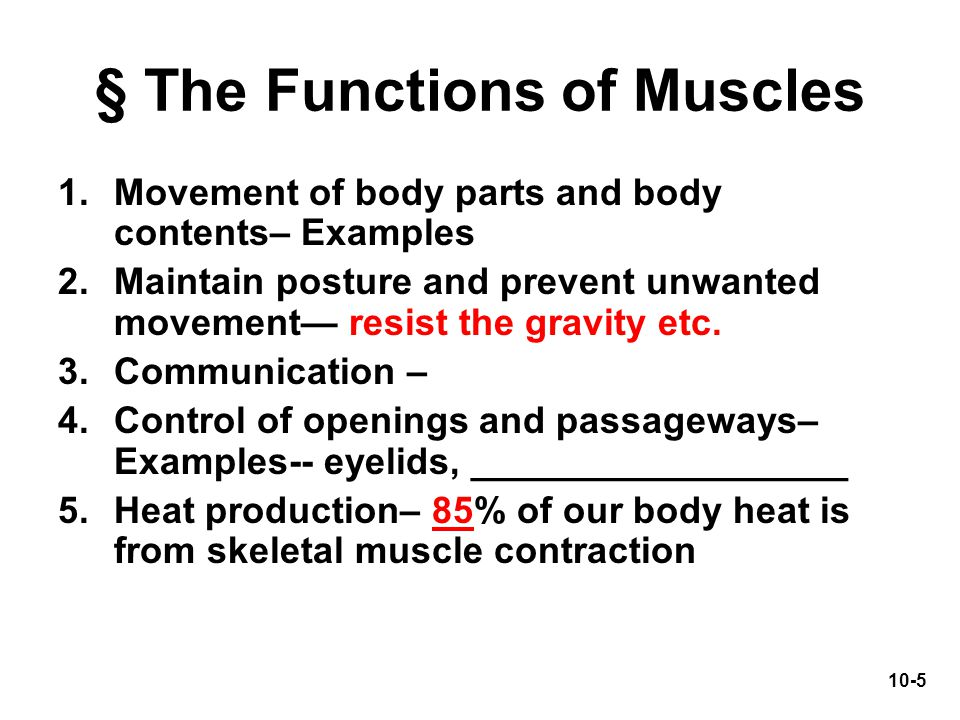 § The Functions of Muscles