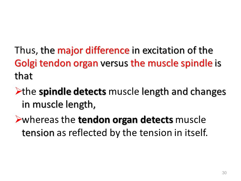 Thus, the major difference in excitation of the Golgi tendon organ versus the muscle spindle is that