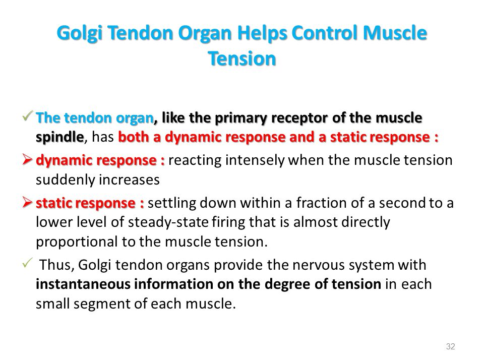 Golgi Tendon Organ Helps Control Muscle Tension