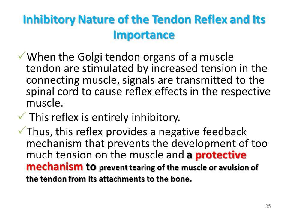 Inhibitory Nature of the Tendon Reflex and Its Importance