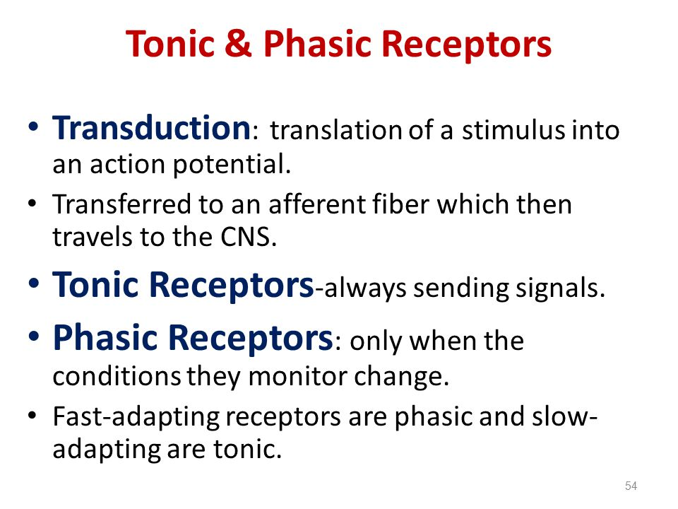 Tonic & Phasic Receptors