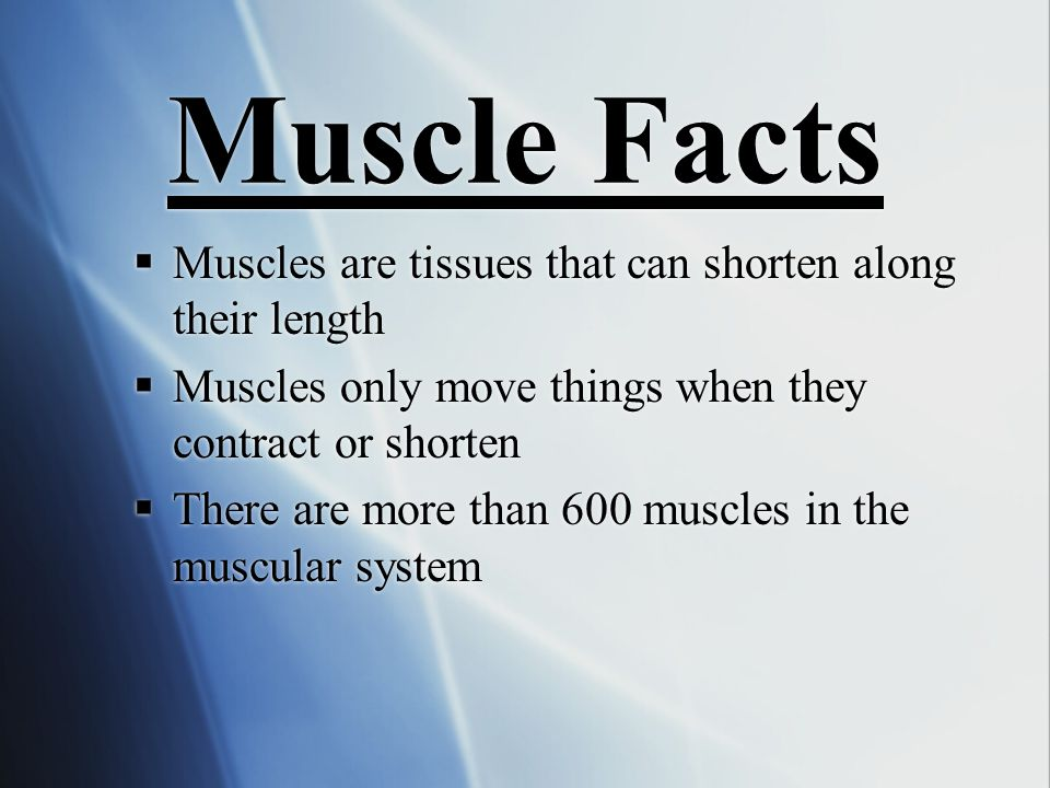 Muscle Facts Muscles are tissues that can shorten along their length