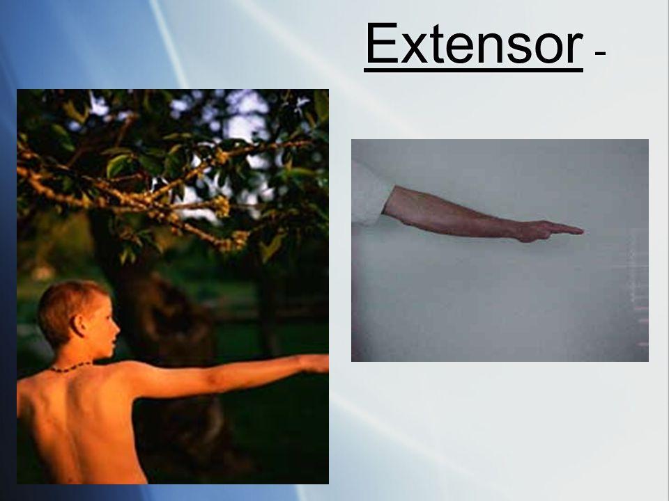 Extensor -