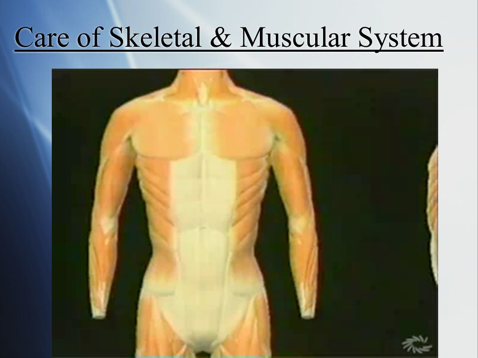 Care of Skeletal & Muscular System