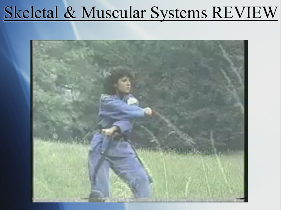 Skeletal & Muscular Systems REVIEW
