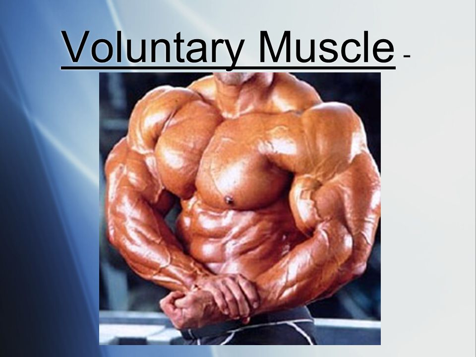 Voluntary Muscle -