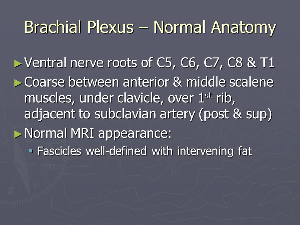 Brachial Plexus – Normal Anatomy