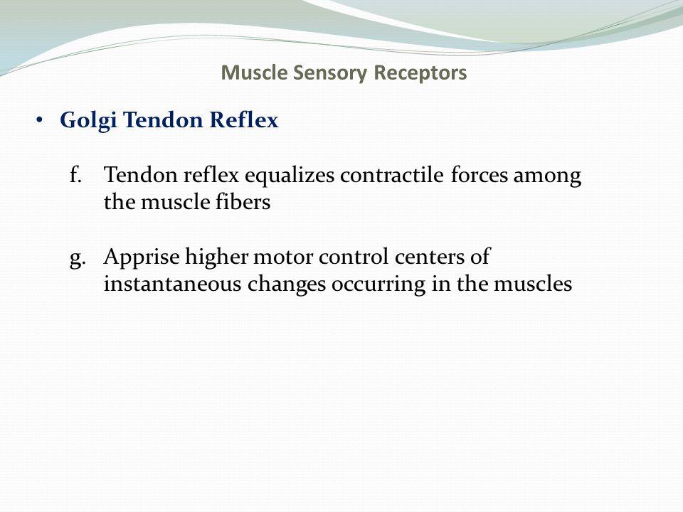 Muscle Sensory Receptors