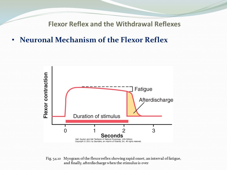 Flexor Reflex and the Withdrawal Reflexes