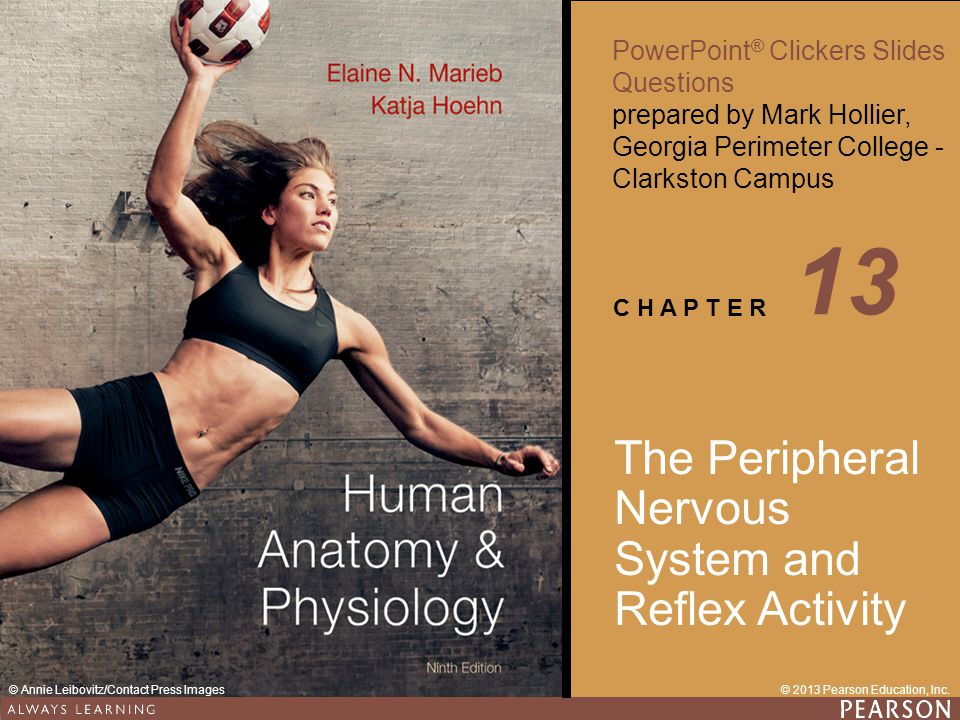 13 The Peripheral Nervous System and Reflex Activity