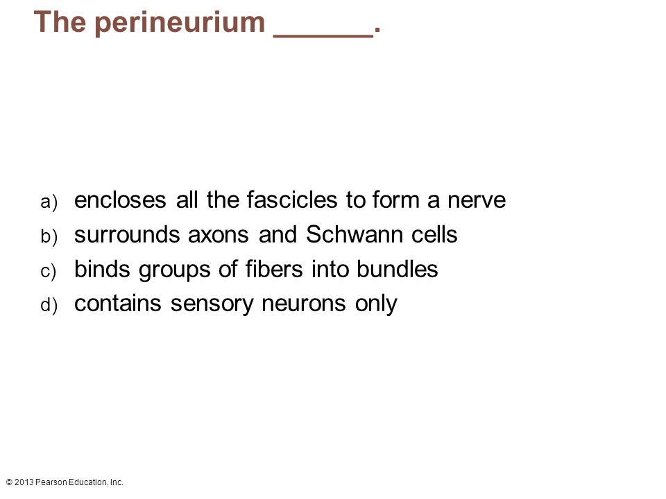 The perineurium ______.