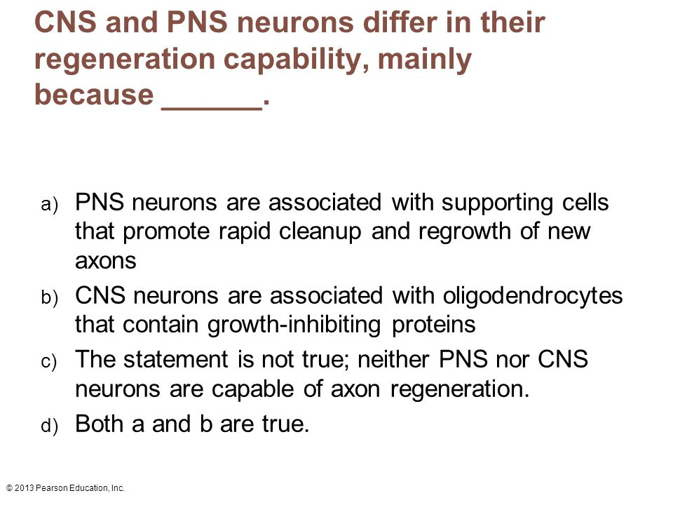 CNS and PNS neurons differ in their regeneration capability, mainly because ______.