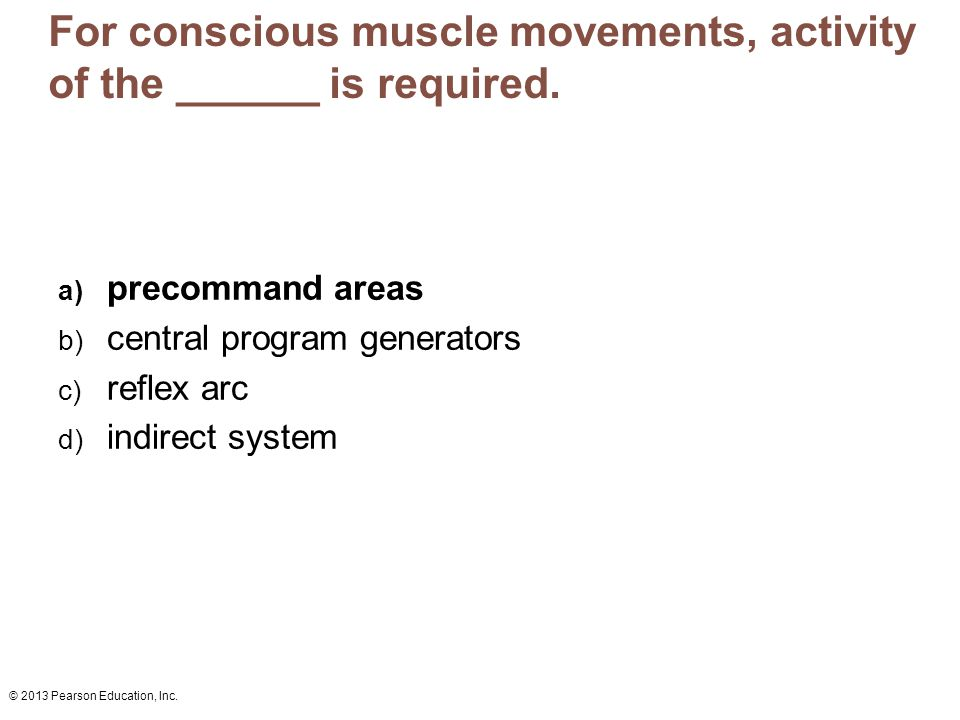 For conscious muscle movements, activity of the ______ is required.